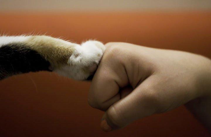 Картинки по запросу захист тварин