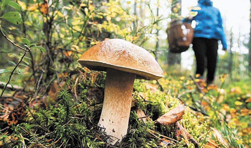 Стережіться лісового «м'яса» » Газета «ВІСТІ» - Бориспіль. Новини.  Інформація. Реклама