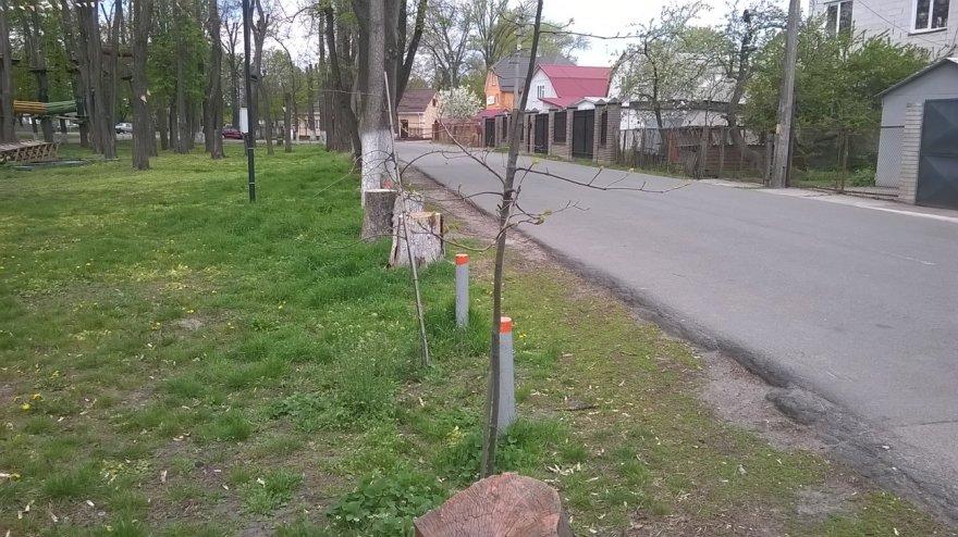 Бориспільський парк: історія створення й принципи оновлення