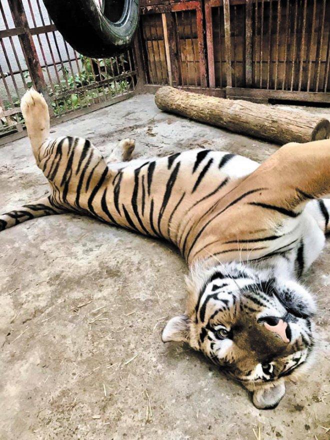Притулок, де рятують диких тварин