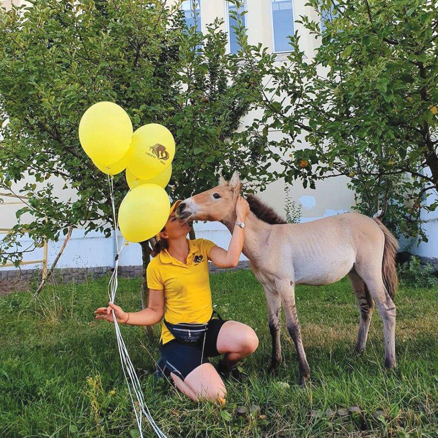 Конячка Пржевальського, врятована з Чорнобильської зони, відзначила перший День народження