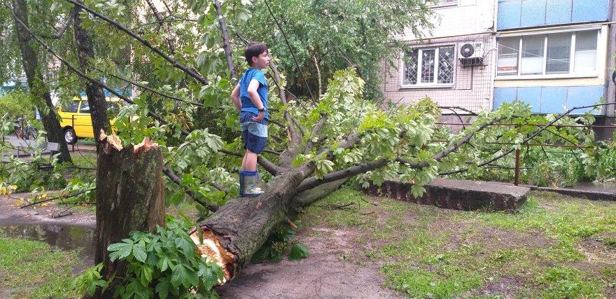 У дворі на вулиці Київський Шлях, 39 через зливу впав каштан та обірвав провід вуличного освітлення.