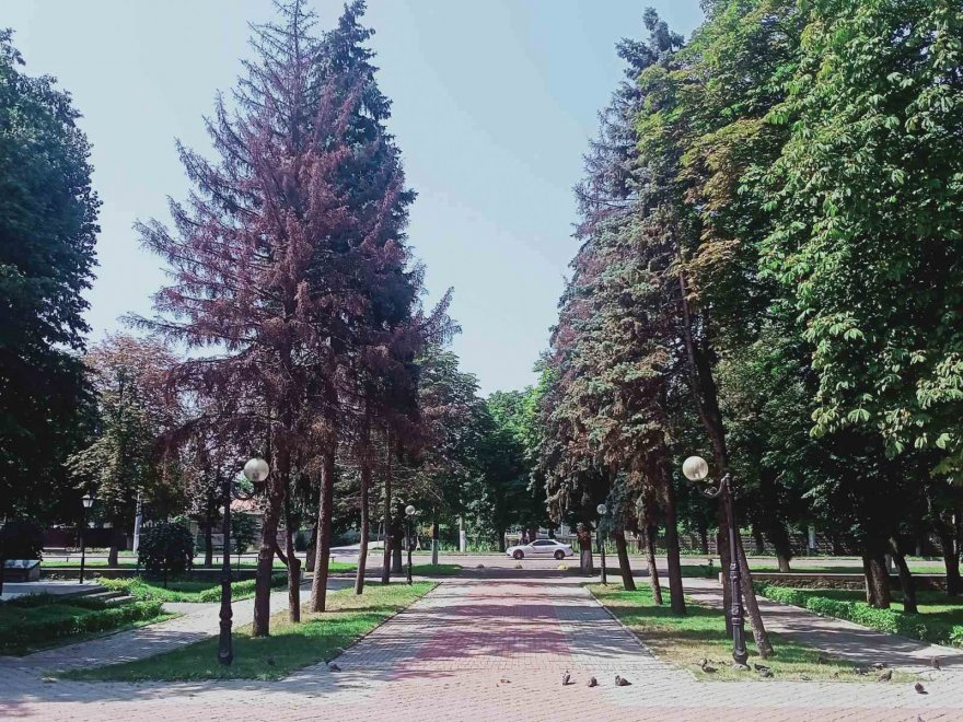 Міський парк  втратить ще 19 дерев